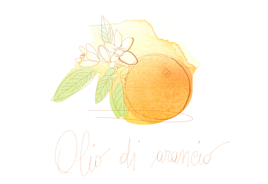 Illustration, watercolor, orange fruit and flower