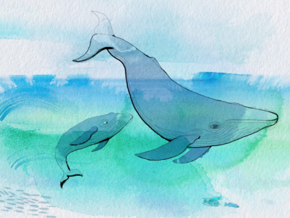 Watercolor animation, whales