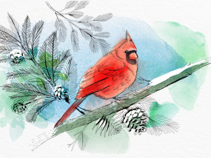Watercolor bird illustration, nature, winter, Alessandra Scandella
