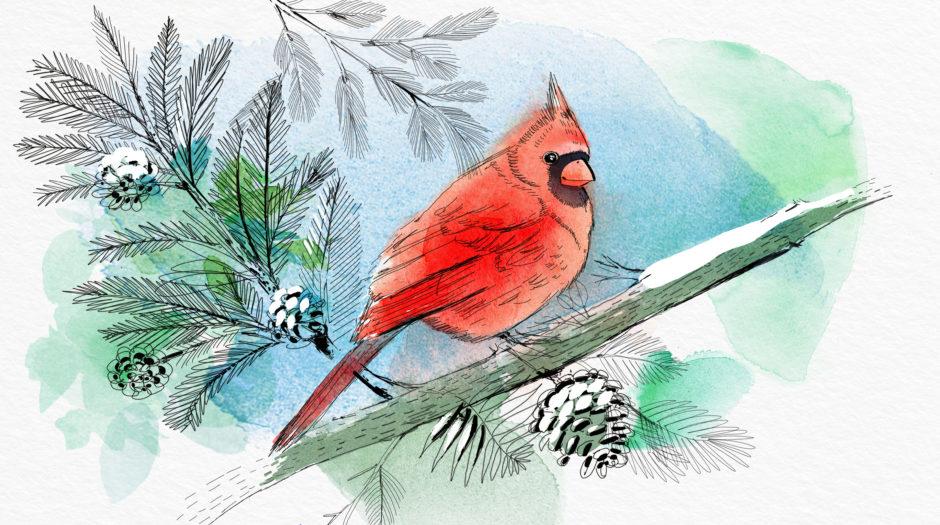 Watercolor bird illustration, nature, winter, Alessandra Scandella